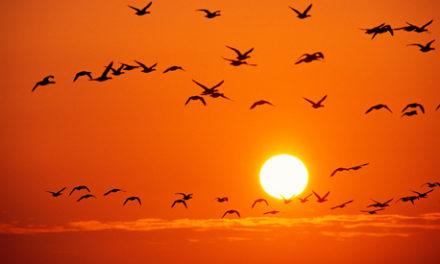 Sobre la hora exacta de la salida del Sol